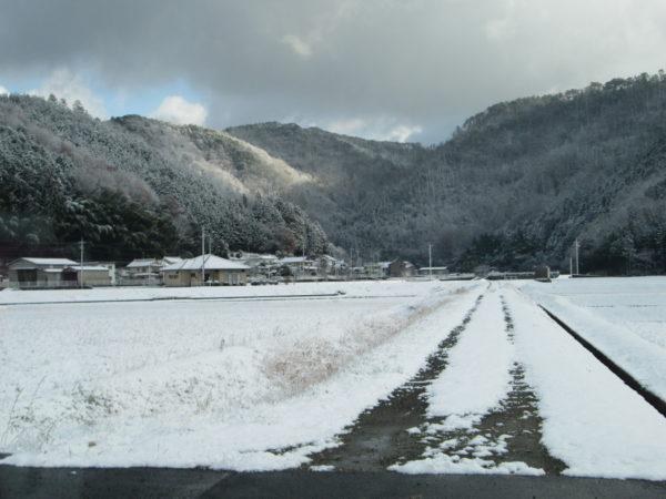 初雪 006