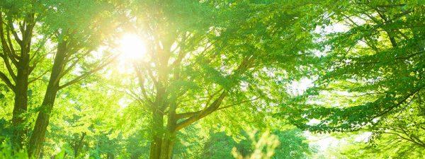 ZEHとは?かしこく光熱費を下げて地球環境にも貢献できる!